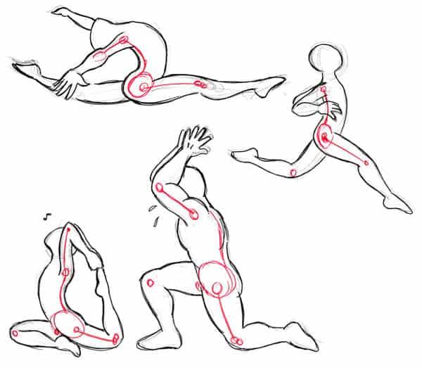 flex anatomy